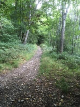 Forêt du Samedi 5 Septembre